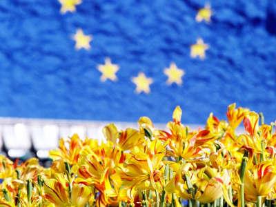EU-Flagge - Blumen - Online-Befragung zur Abschaffung der Sommerzeit in der gesamten EU.