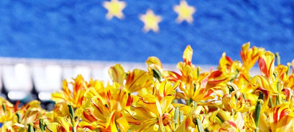 EU-Flagge mit Blumen im Vordergrund. Online-Fragebogen zur Zeitumstellung in der EU.