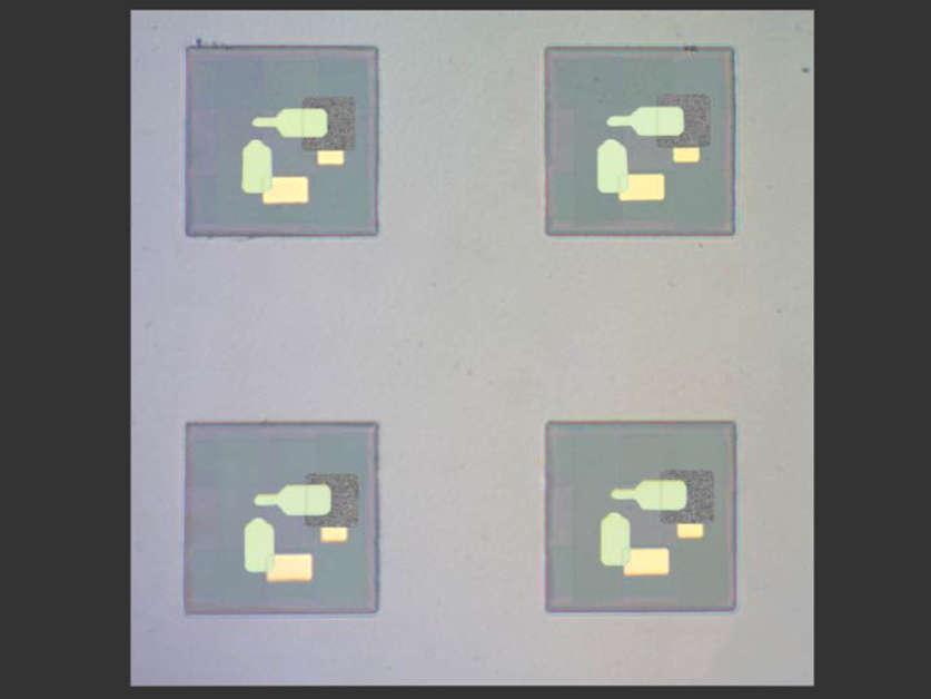 Die kleinsten Roboter der Welt, die fühlen können; 100 Mikrometer breit; bestehend aus einem Polymerchip mit elektronischer Schaltung.