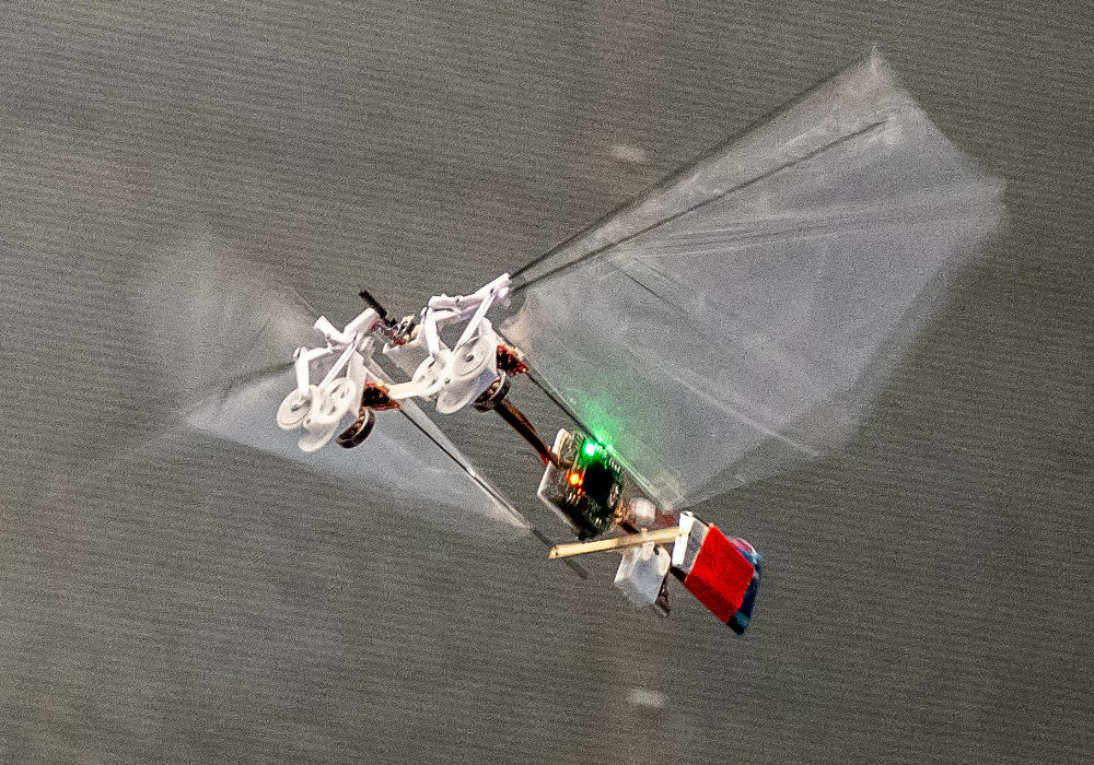 Die Roboter-Fliege Delfly Nimble ist extrem wendig - genau wie eine Fruchtfliege.