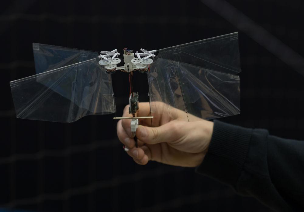 Die Roboter-Fliege Delfly Nimble aus der Nähe betrachtet.