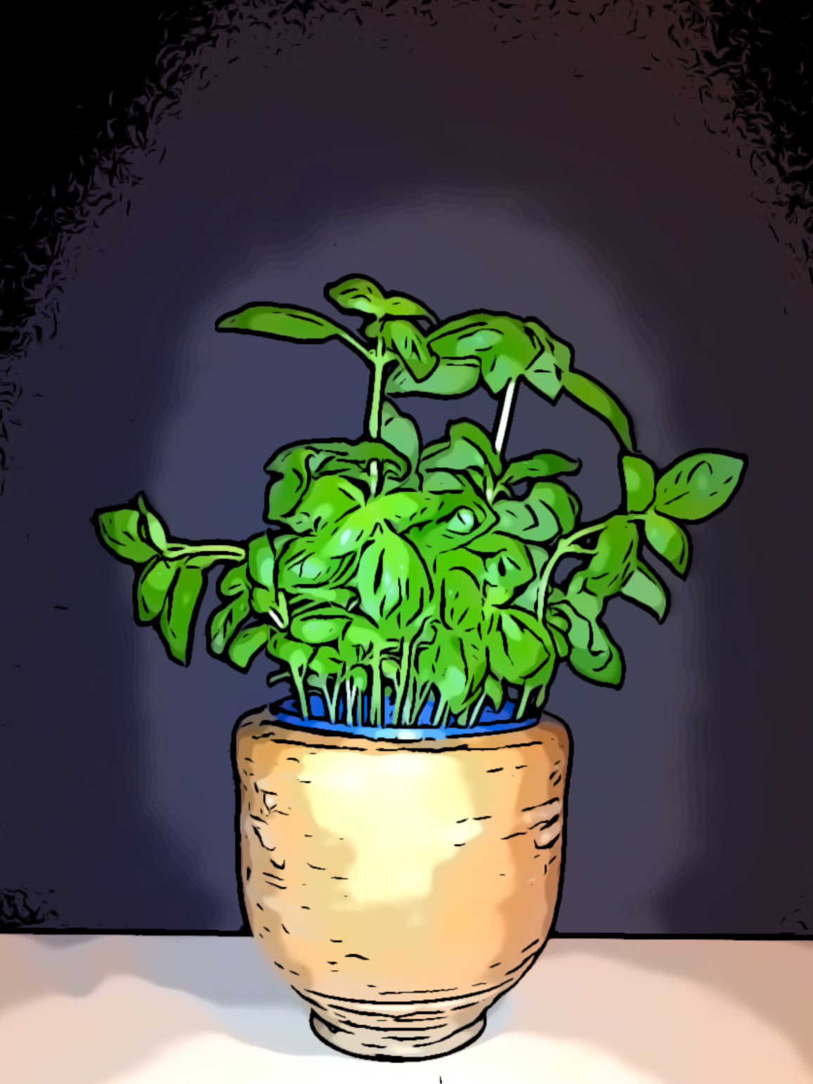 Basilikum-Pflanze im Topf