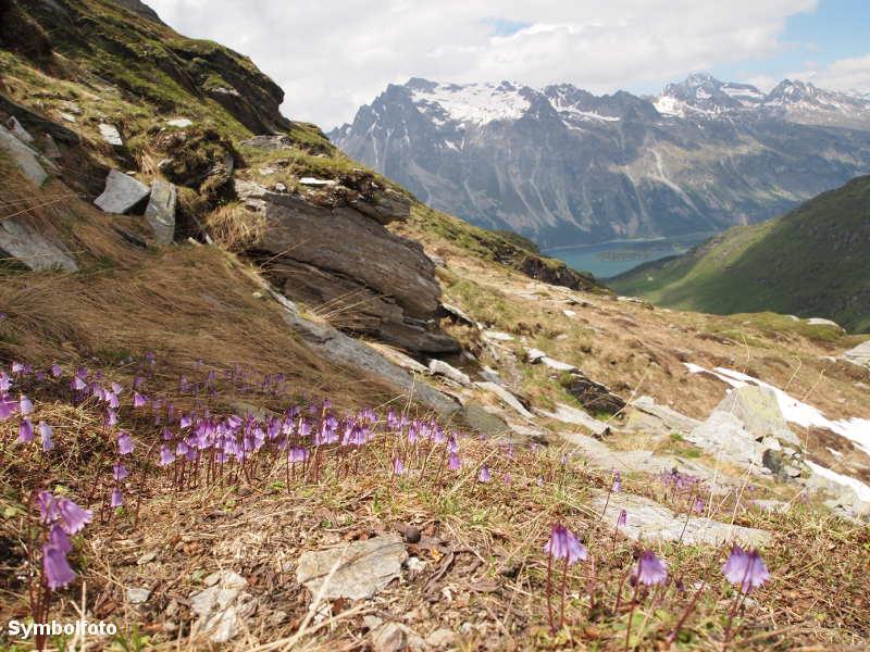Blick auf den Silser See in Sils Maria in der Schweiz.