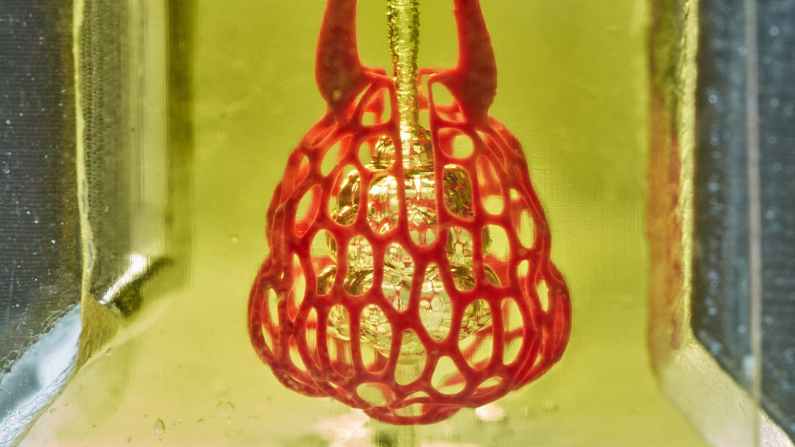 Lunge aus dem 3D-Drucker in einem besonderen Hydrogel.
