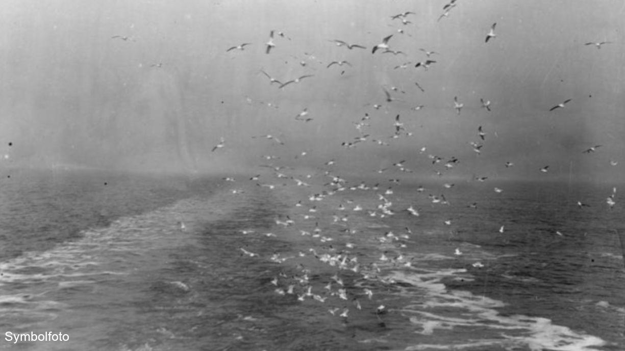 Möwen auf hoher See