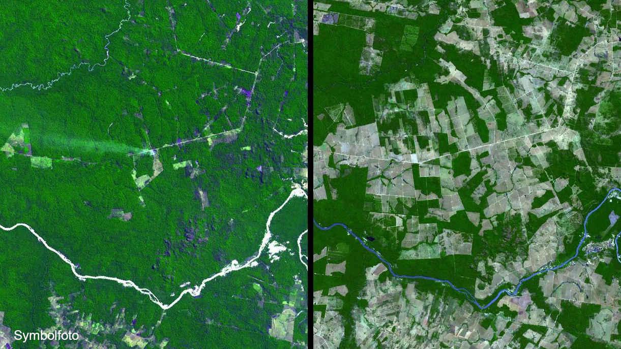 Vorher-Nachher-Vergleich der Abholzung des Amazonas-Regenwaldes.