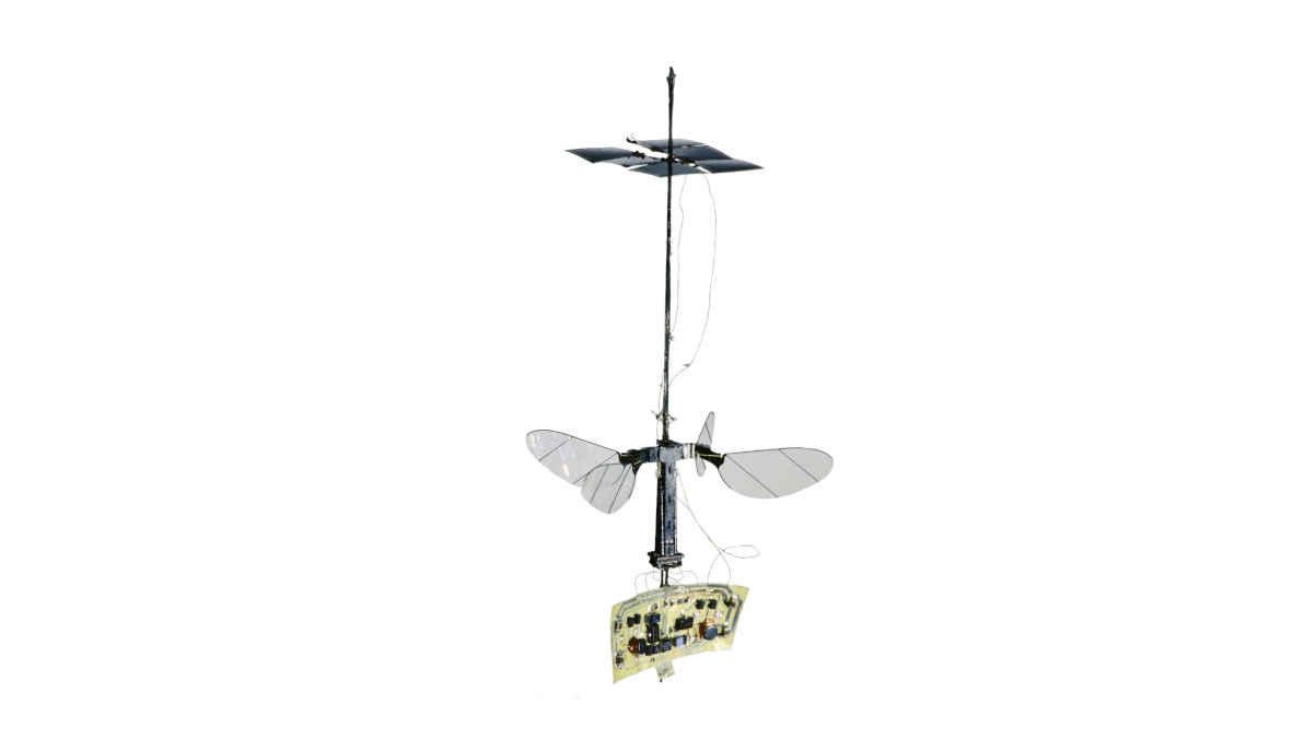 Die neue RoboBee X-Wing wird nicht über ein Stromkabel, sondern über Solarzellen angetrieben.