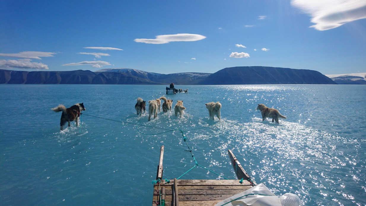 Dieses Foto symbolisiert eine Handlungsaufforderung, etwas gegen den Klimawandel zu unternehmen. Schlittenhunde ziehen einen Schlitten über das Eis durch Schmelzwasser auf Grönland.