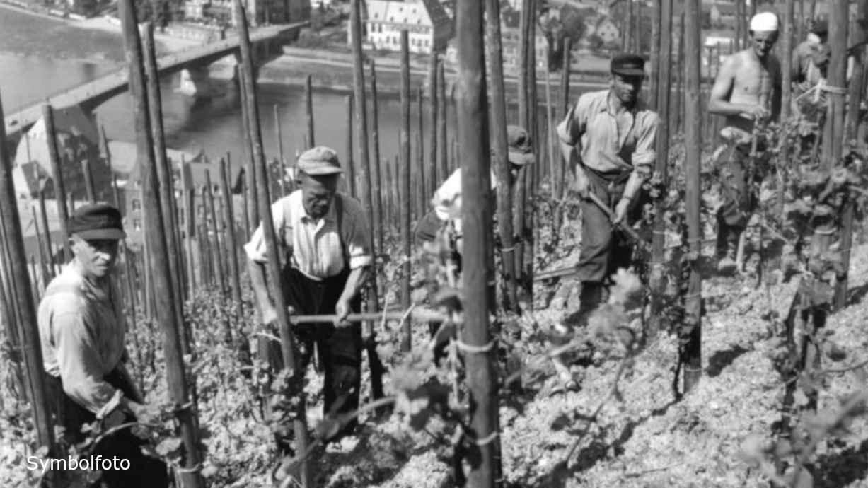 Arbeiter beim Weinanbau im Weinberg