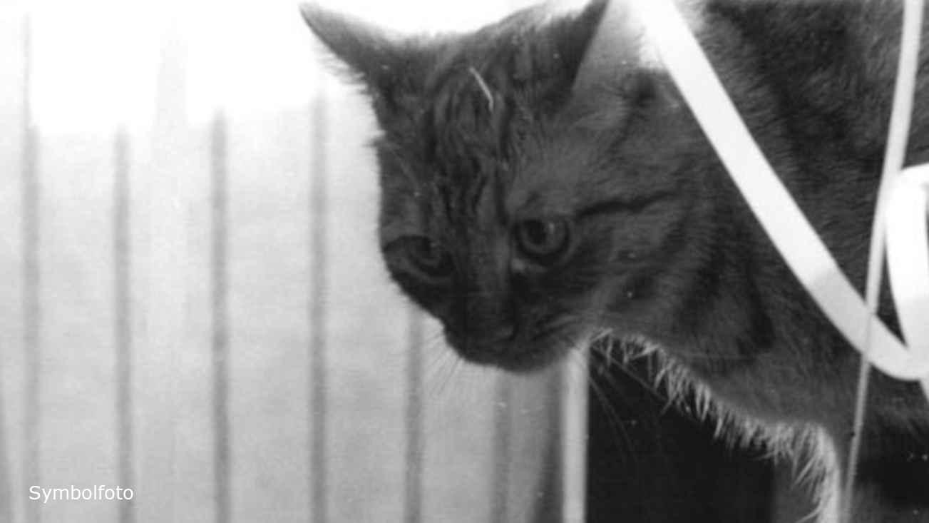 Katze guckt und sucht vielleicht nach etwas zum Essen.