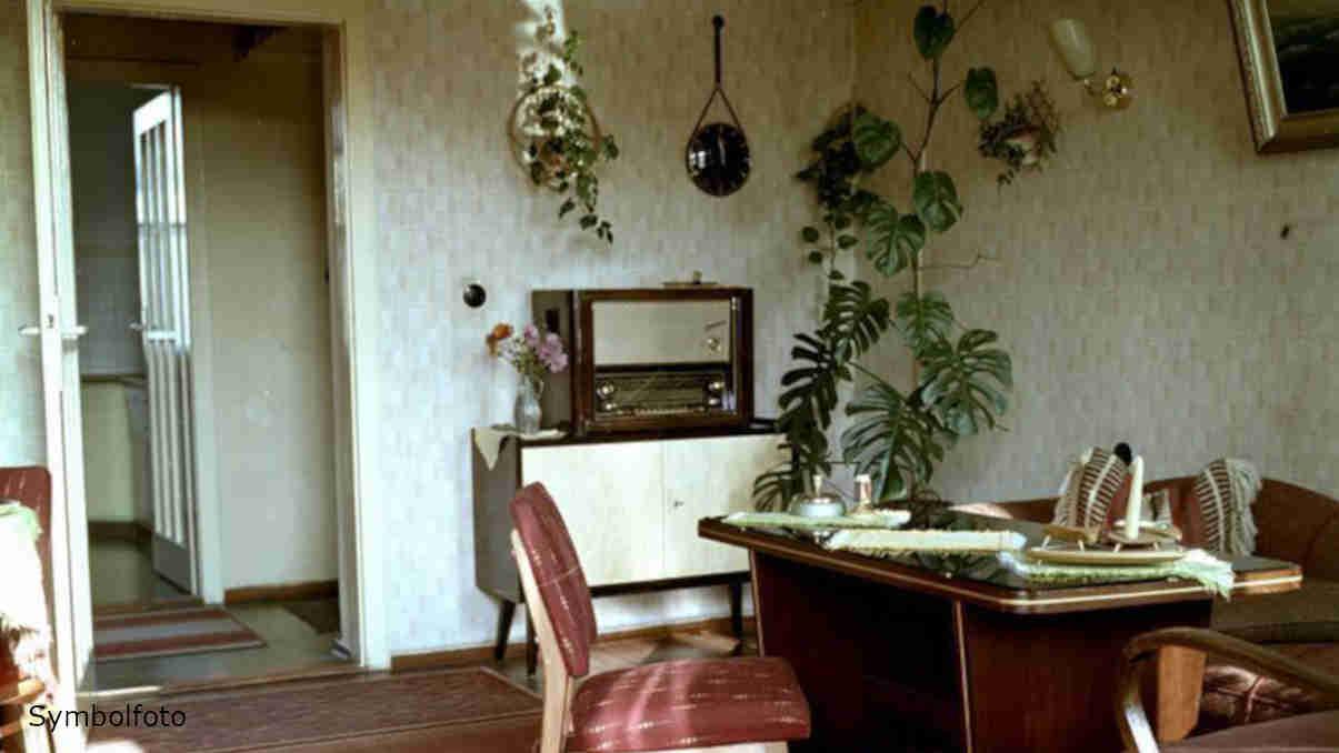Zimmerpflanzen in einem Innenraum in einer Wohnung.