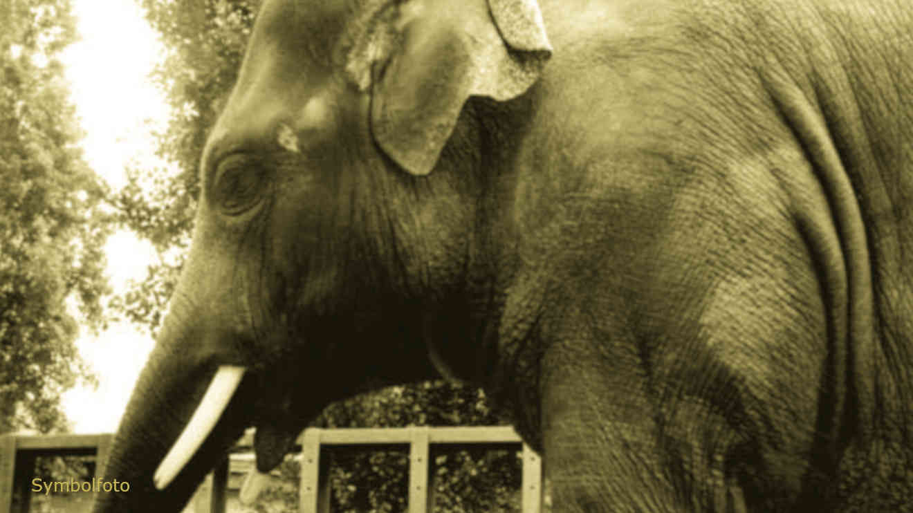 Ein Elefant im Zoo.