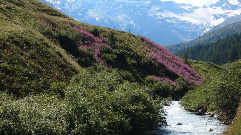 Fedacla (Fexbach) durchfließt das Fextal im Oberengadin in der Schweiz.